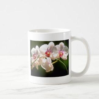 orquídeas blancas, plantación de la perspectiva, f taza básica blanca