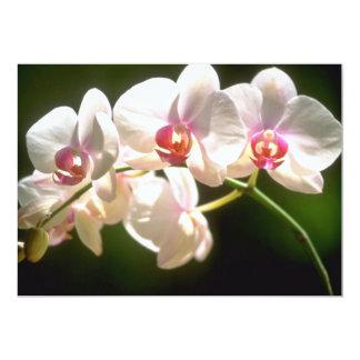 """orquídeas blancas, plantación de la perspectiva, invitación 5"""" x 7"""""""