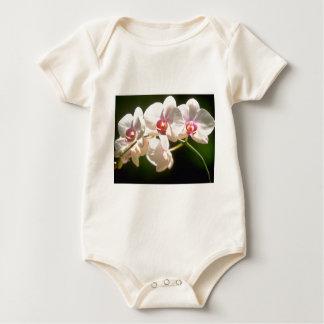 orquídeas blancas, plantación de la perspectiva, mamelucos