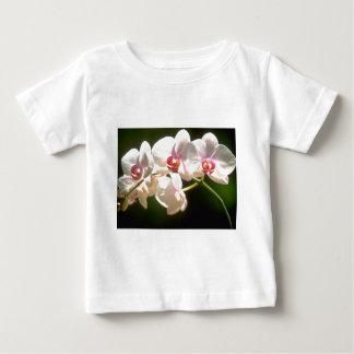 orquídeas blancas, plantación de la perspectiva, playera