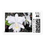 Orquídeas blancas quebradizas en un jardín sombrío