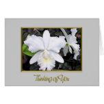 Orquídeas blancas quebradizas en un pensamiento so felicitación