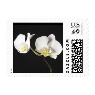 Orquídeas blancas franqueo