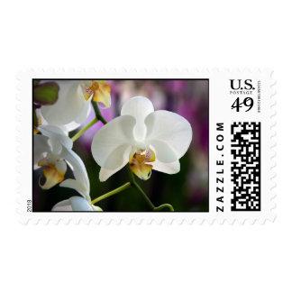 Orquídeas blancas sellos