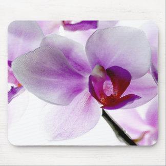Orquídeas blancas tapete de ratones