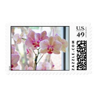 Orquídeas blancas y rosadas sellos