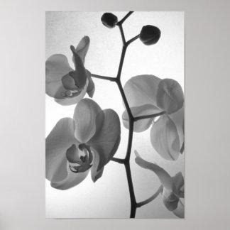 Orquídeas blancos y negros en la impresión del pos posters