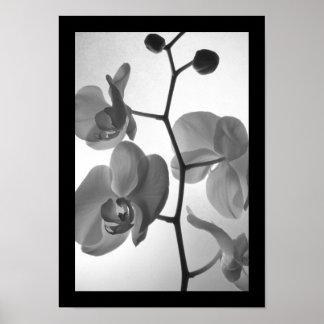 Orquídeas blancos y negros en la impresión del pos poster