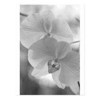 Orquídeas blancos y negros tarjeta postal