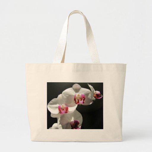 Orquídeas Bolsa