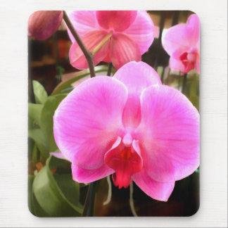 Orquídeas coloreadas rosa del Phalaenopsis Alfombrillas De Ratón