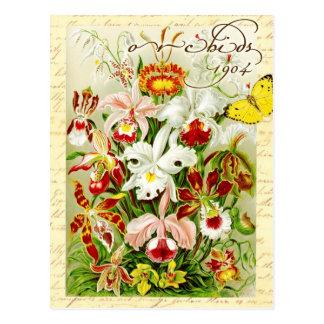 Orquídeas coloridas y mariposa amarilla postales