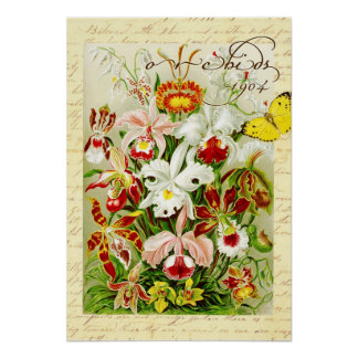 Orquídeas coloridas y mariposa amarilla póster