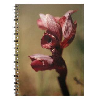 Orquídeas de Eaastern Serapis Cuadernos