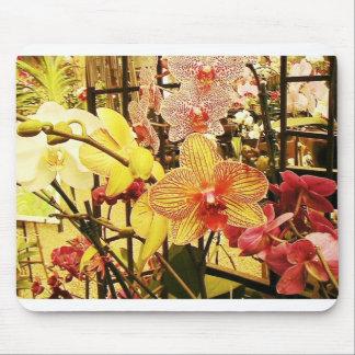 Orquídeas de la Florida Tapete De Ratón