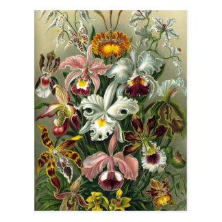 Orquídeas de la selva tropical del vintage, tarjetas postales