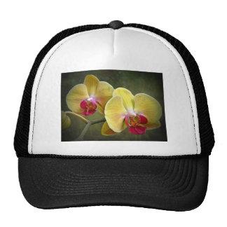 Orquídeas de polilla amarillas - Phalaenopsis Gorra