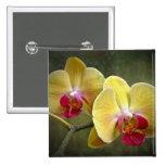 Orquídeas de polilla amarillas - Phalaenopsis Pins