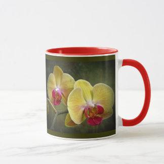 Orquídeas de polilla amarillas - Phalaenopsis Taza