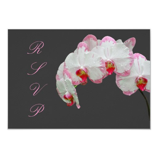 Orquídeas de polilla del rsvp de PixDezines/rosa Comunicado Personal