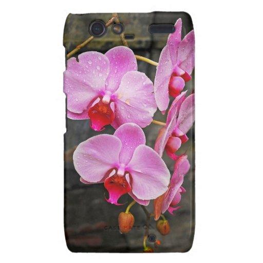 Orquídeas de polilla rosadas hermosas motorola droid RAZR carcasas