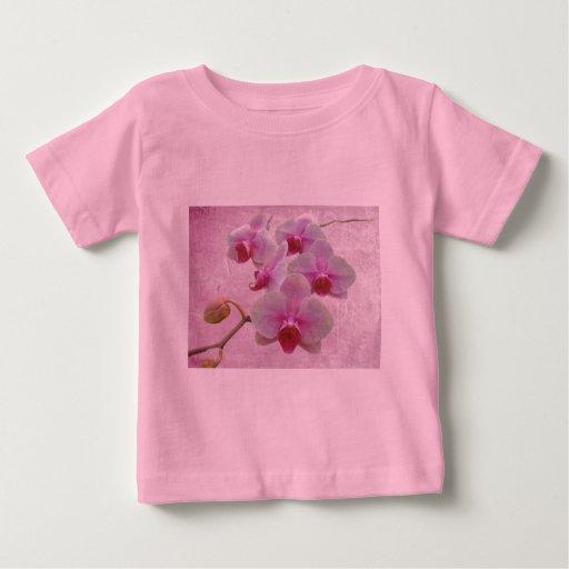 Orquídeas de polilla rosadas - Phalaenopsis Playeras