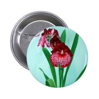 Orquídeas de señoras de baile pin
