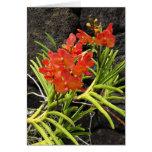 Orquídeas de Vanda Tarjeta De Felicitación