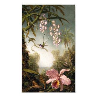Orquídeas del aerosol con la impresión del colibrí fotografía