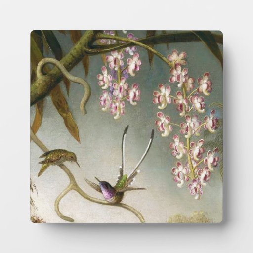Orquídeas del aerosol con la placa del colibrí