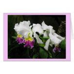 Orquídeas del fucsia, amarillas y blancas felicitación