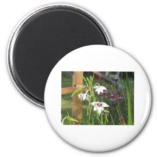 orquídeas del pavo real imán redondo 5 cm