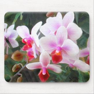 Orquídeas del Phalaenopsis de la lavanda y del nar Tapetes De Ratones