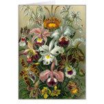 Orquídeas del vintage felicitacion