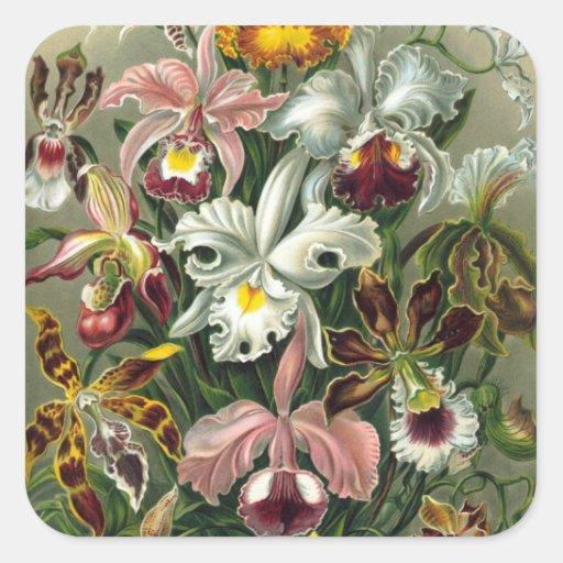 Orquídeas del vintage pegatina cuadrada