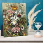 Orquídeas del vintage placa para mostrar