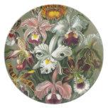 Orquídeas del vintage platos para fiestas
