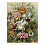 Orquídeas del vintage postal