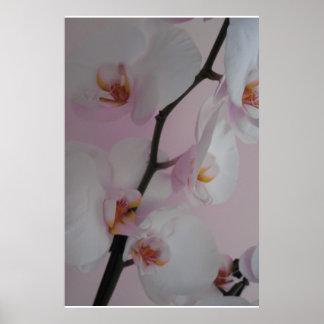 Orquídeas en invierno póster