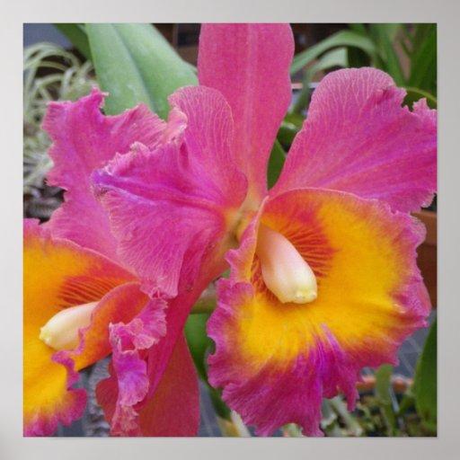 Orquídeas en la floración impresiones