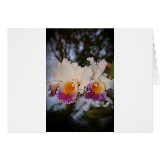 Orquídeas en la puesta del sol tarjeta de felicitación