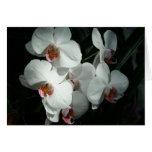Orquídeas en las tarjetas en blanco de los jardine