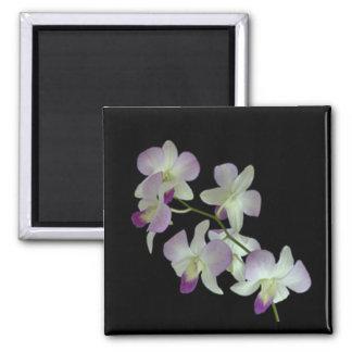 Orquídeas en negro imán cuadrado