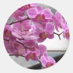Orquídeas Etiqueta Redonda