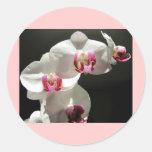 Orquídeas Etiquetas Redondas