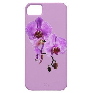 Orquídeas florecientes de Purle - phalenopsis iPhone 5 Coberturas