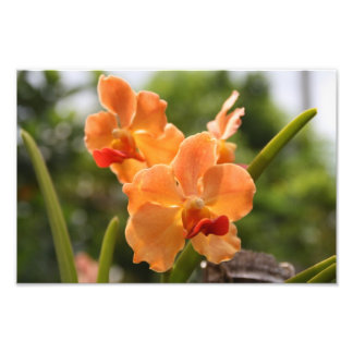 Orquídeas Impresión Fotográfica