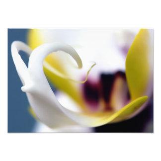 Orquídeas Fotografía
