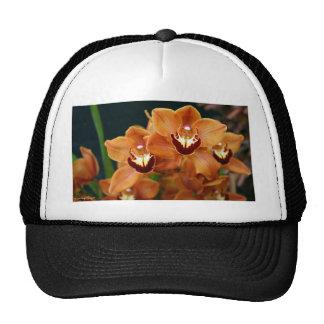Orquídeas Gorras