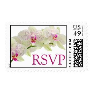 Orquídeas hermosas RSVP del blanco y de las rosas Sello